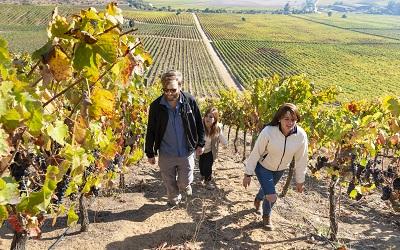 Valle del Maipo estrena cinco nuevas rutas en torno al vino con apoyo de Corfo