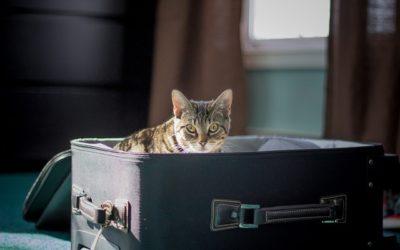 Las mascotas ahora pueden viajar protegidas en salidas al extranjero