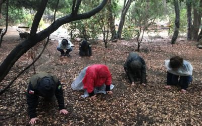 Baños de Bosque (Shinrin Yoku), o el ecosistema al servicio de la salud humana