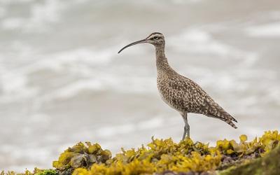 Día Mundial de las Aves Playeras busca protección de más de 400 especies