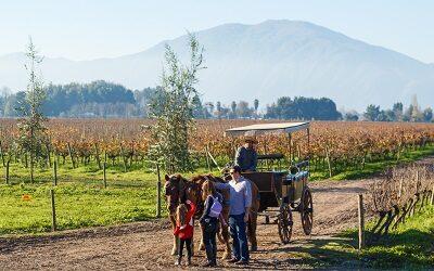 Vendimias invitan a vivir el enoturismo en las regiones viñateras de Chile