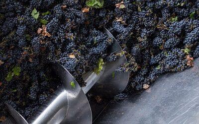 Vendimias 2020: las grandes fiestas del vino que llegan con marzo al país