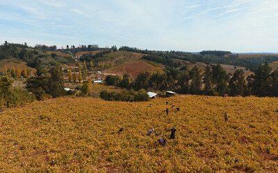 Viña La Causa, del Valle del Itata, presenta su primer vino rosé gran reserva
