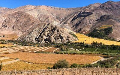 Junto a 2.500 productores se conmemoró Día del Pisco en Atacama y Coquimbo