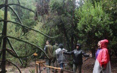 Baños de bosque verán en plataforma Activa Turismo en Línea este martes 16