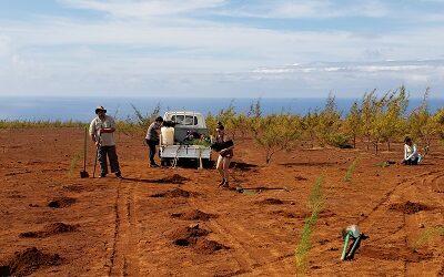 Forestación para que Rapa Nui mejore resiliencia al cambio climático