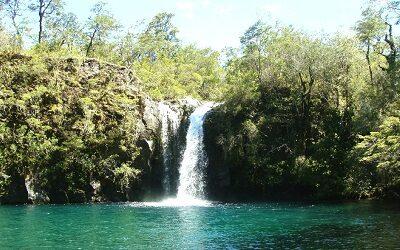 Programa Grandes Parques Bicentenario busca fortalecer la biodiversidad